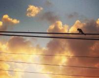 birdsun